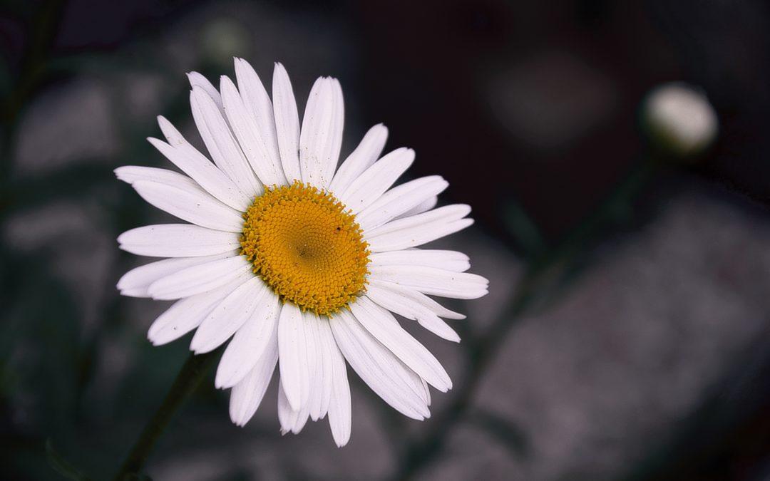 Condoglianze a Mariagrazia Speranza